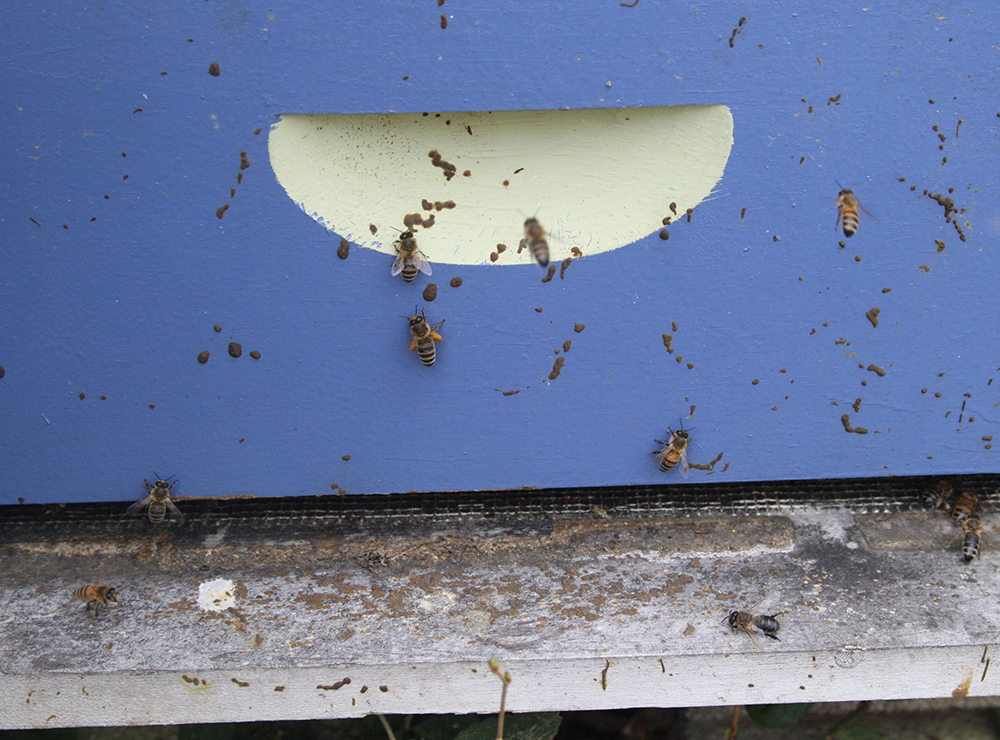 Dysentery on the front of a hive is a symptom but not indicative of Nosema disease.