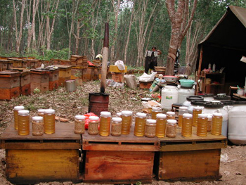 Roadside honey sale, and a few jars of pollen. This is in a apiary next to the rubber tree forest; Xishuangbanna, Yunnan, China. March 28, 2002. Photo courtesy of Zachary Huang.